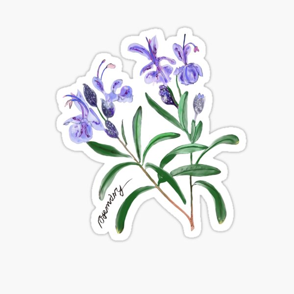 Rosemary Sticker
