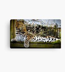 Leopard Watch Canvas Print