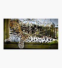 Leopard Watch Photographic Print