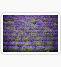 Lines of Lavender Sticker