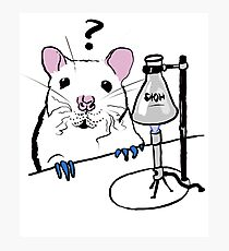 Chemistry Rat Photographic Print