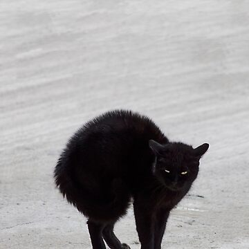 Black Cat, Witch's Familiar by janemcdougall
