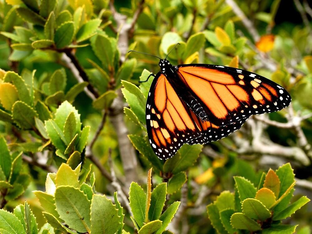 Butterfly in Spring by Douglas E.  Welch