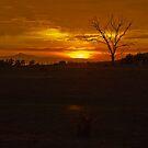 Sunrise Over the Freycinet Penninsula by TeaCee