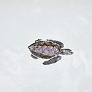 Little turtle by Bente Agerup