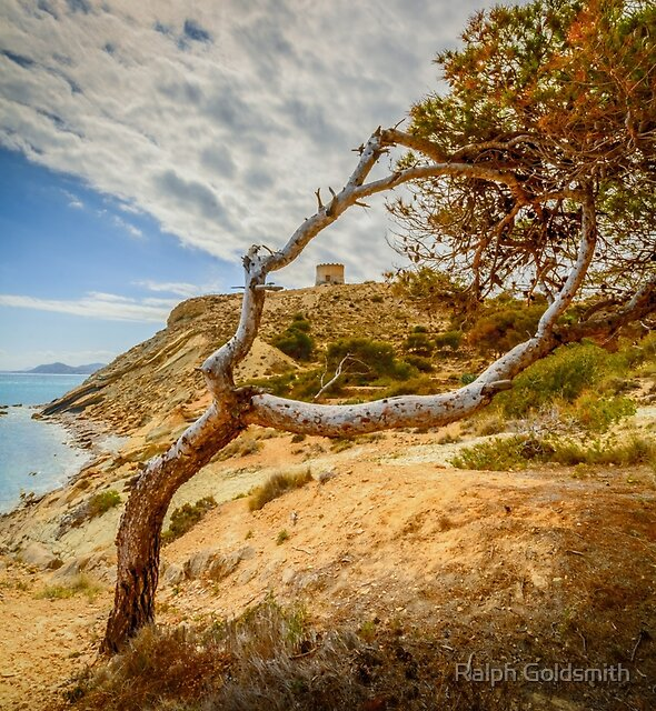 The tower at Malladeta through the tree by Ralph Goldsmith