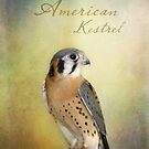 American Kestrel by Lynn Starner