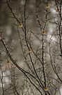 Touch of Autumn by yolanda
