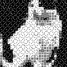 Domino, the Black & White Cat by Gianni A. Sarcone