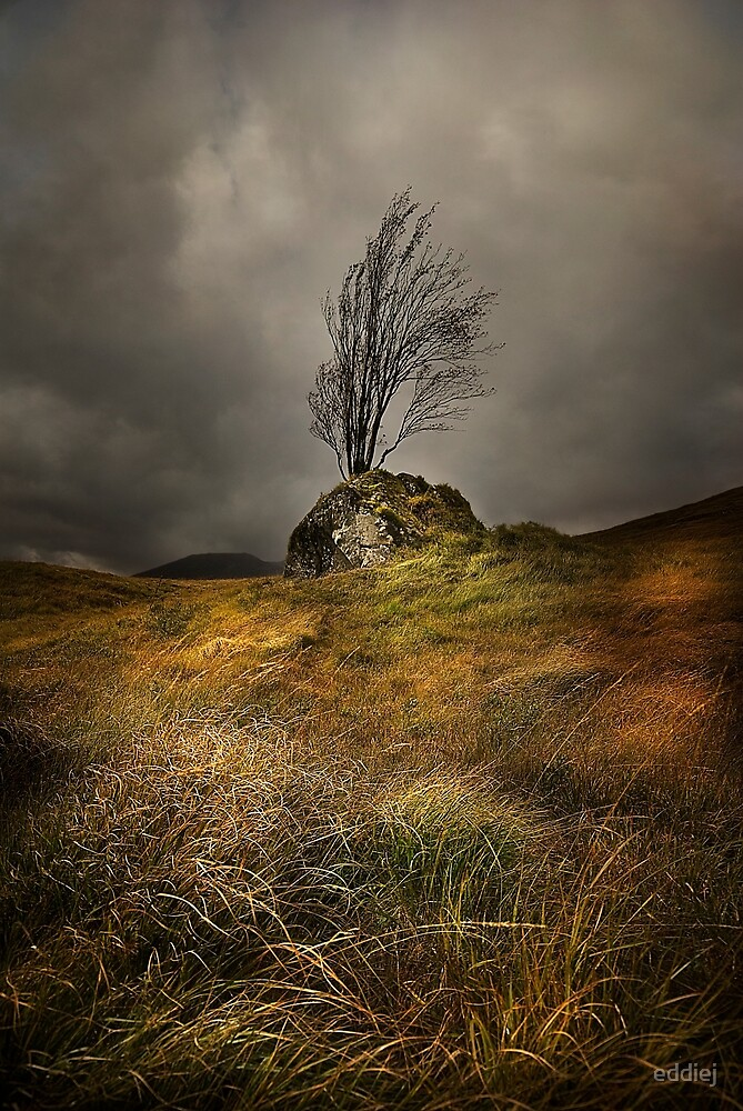 Surviving the elements by eddiej