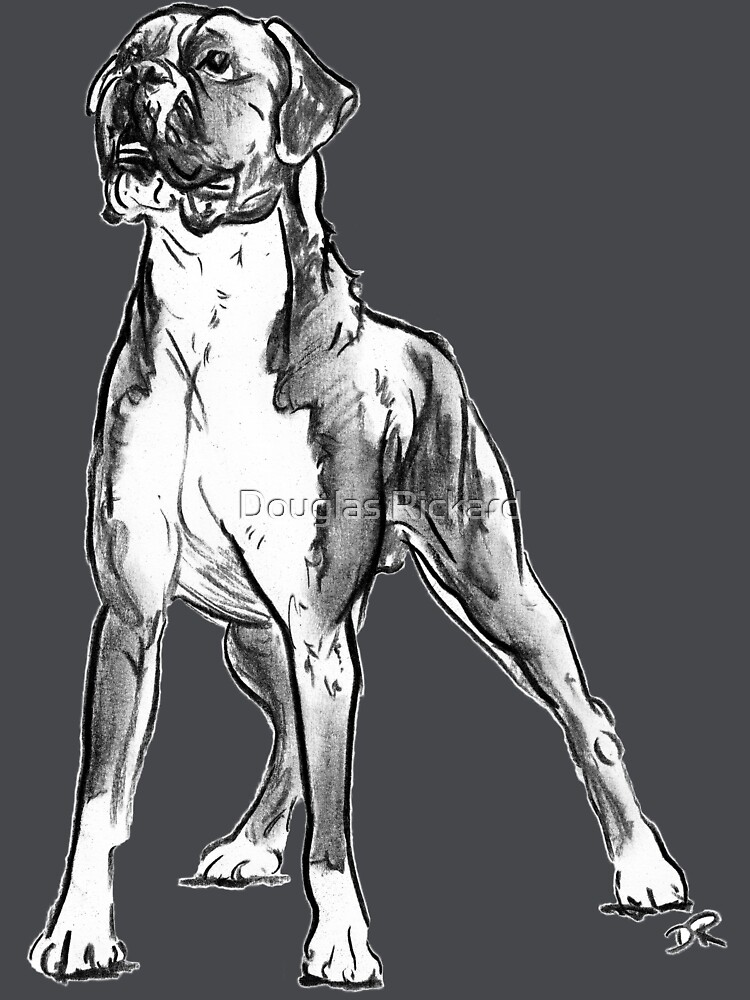 Boxer Dog Drawing by douglasrickard