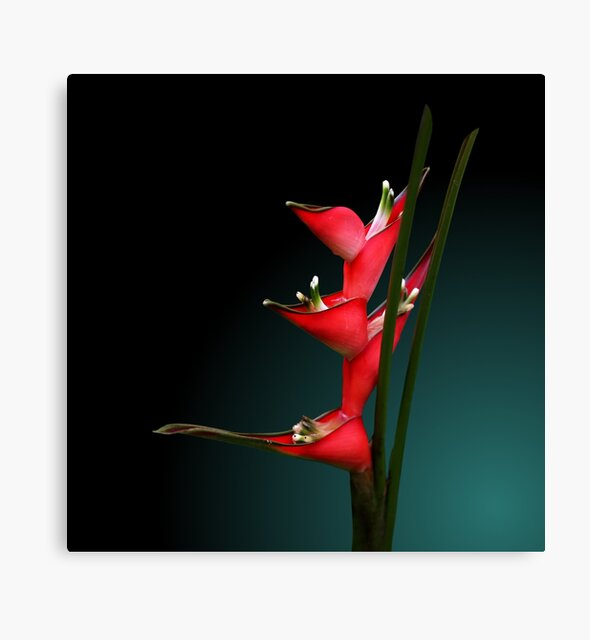 Studio Dalio - Heliconia Flowers Canvas Print