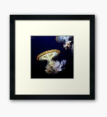 Invasion of the Japanese Sea Nettles Framed Print