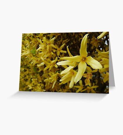 Forsythia Hedge Greeting Card