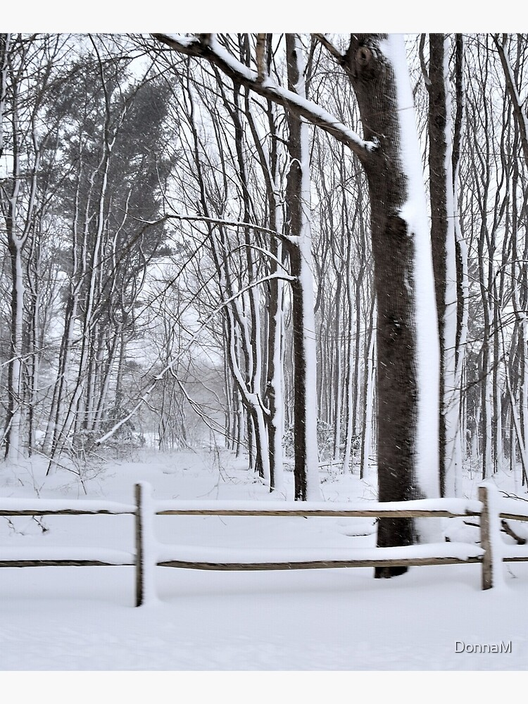 Winter Woods by DonnaM