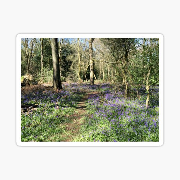 Bluebells in Earlswood Sticker