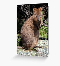 The Quokka of Rottnest Greeting Card