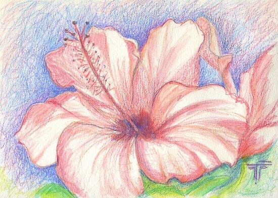 hibiscus by terezadelpilar ~ art & architecture
