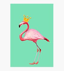 Flamingo Queen 2 Photographic Print