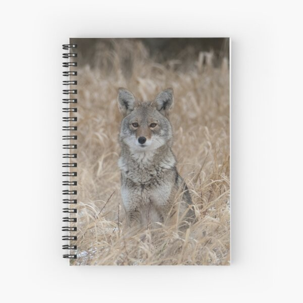 The Little One coyote Guemes Island Spiral Notebook