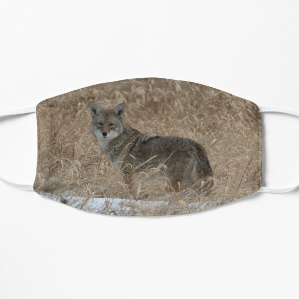 The Little One Coyote Guemes Flat Mask