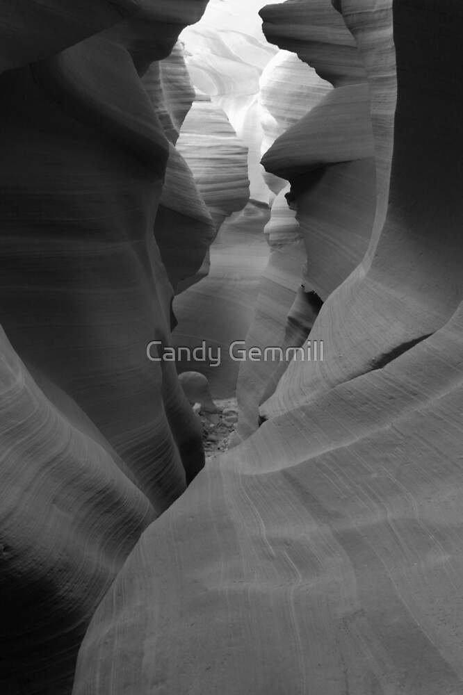 Spiral Beauty by Candy Gemmill