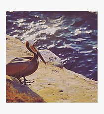 Pelican Point Photographic Print