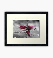 Red Color Pop Trillium Framed Print