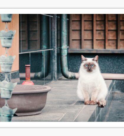 Cat, Aso, Temple Sticker