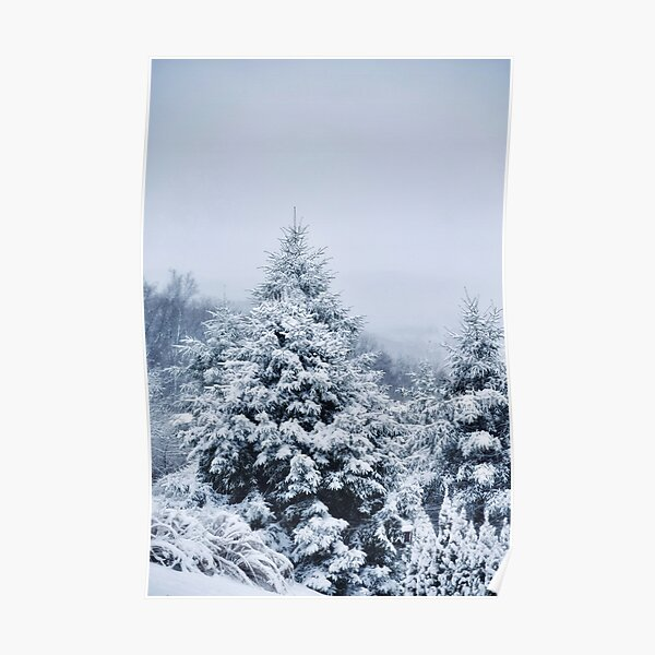 Snowy Trees Wintery Season  Poster