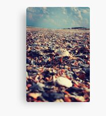 Southern Shells Canvas Print