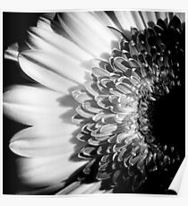 Black & White Pinhole Gerbera daisy Poster