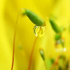 Springlike  by Yool