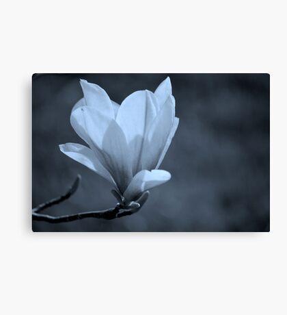 Magnolia #2 Canvas Print