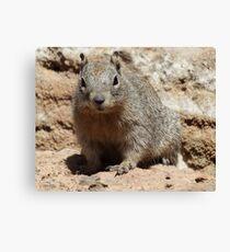 Squirrel Friends  Canvas Print