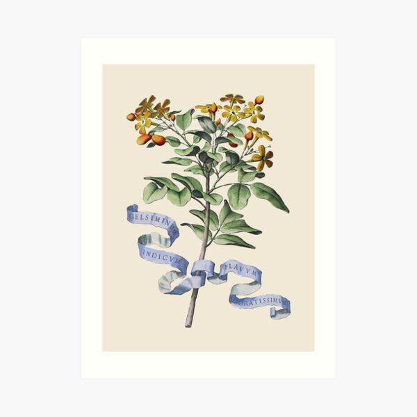 Ilustración botánica de flores antiguas Lámina artística