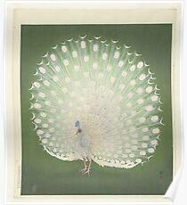 Peacock, Ohara Koson, Watanabe Shôzaburô Poster