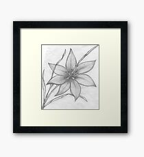 Lily,Pencil Drawing,  Framed Print