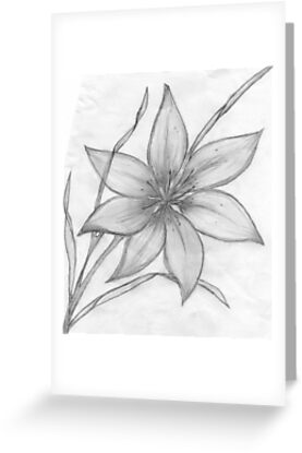 Lilypencil drawing greeting cards by maebelle redbubble lilypencil drawing by maebelle m4hsunfo