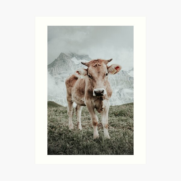 Swiss cow, mountains in background Art Print