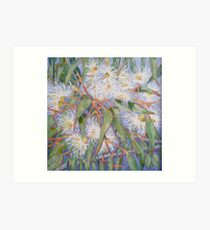 White gum blossom outside our window 2012Ⓒ. Oil on canvas Art Print