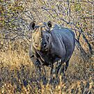 Black Rhino by Jan Fijolek