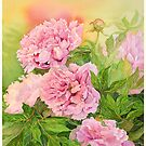 PEONY by Carol McLean-Carr