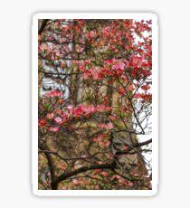 Pink Spring Dogwood Sticker