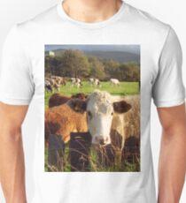 Cows of Llanfairfechan Unisex T-Shirt
