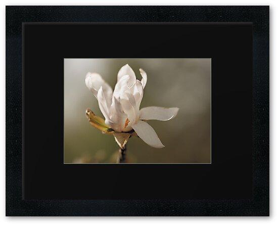 Flower by Jen Wahl