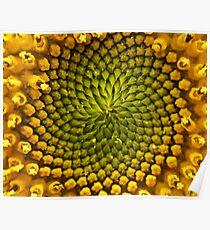 Natural Geometries Poster
