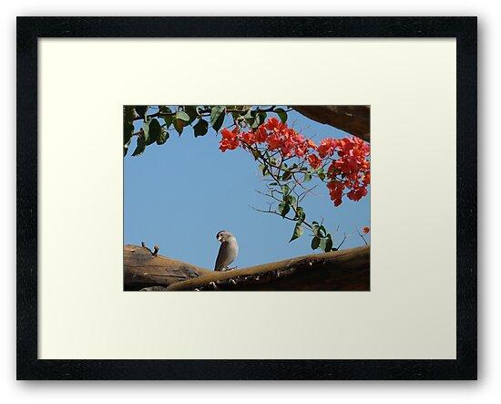 Bougainvillea Birdy by DoreenPhillips