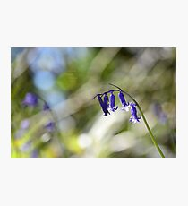 """ Tiny Bells Of Sapphire Blue "" Photographic Print"