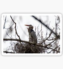 Great Blue Heron in the Heronry Sticker
